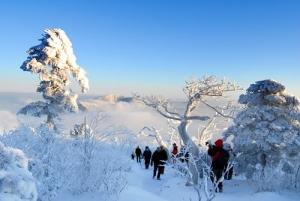 태백산 겨울 풍경