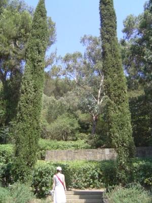 몸과 마음을 치유하는 숲, '피톤치드'의 강력한 효능