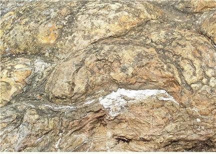 오랜연대설적으로 중생대로 추정되는 지층에서 발굴된 스트로마톨라이트.