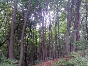 청룡산 산림욕장