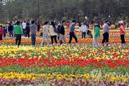 태안 튤립꽃 축제