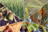 이스라엘 땅의 '식량 7종'