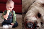 개와 아기