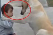 아이의 친구 강아지
