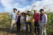 (사진5)김순권 교수(왼쪽에서 네 번째)는 몽골 다르항 농업연구소 시험장에서 관계자들과 OPV방식으로 생산한 큰 옥수수 MCP를 들고 기념 사진을 찍고 있다.