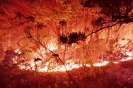 2일 오전 강원 고성군 토성면 도원리에서 시작된 산불이 건조주의보와 강풍주의보가 발효 중인 가운데 산림을 활활 태우고 있다. 화마와 사투를 벌이고 있다. 0시 현재 주택 3채가 소실됐다. 다행히 인명피해는 없었다.