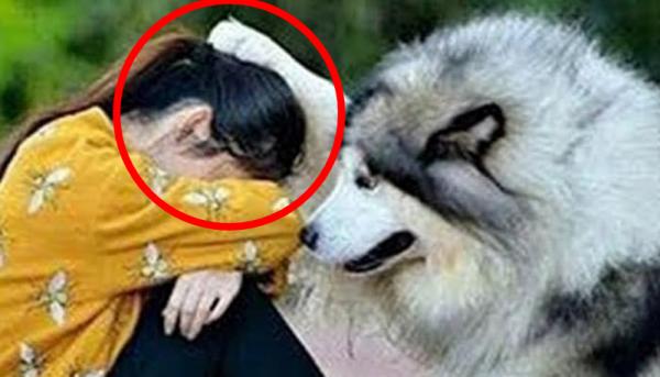 토닥토닥 위로해주는 강아지