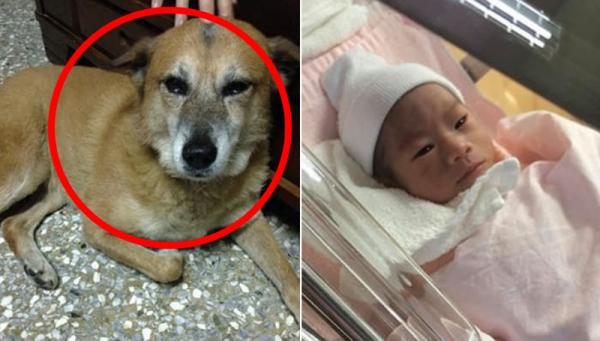 3년전 죽은 강아지와 닮은 아기