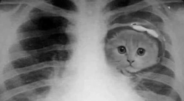 엑스레이에 찍힌 고양이
