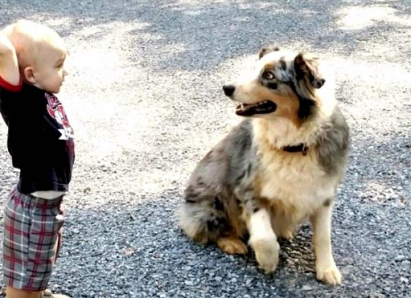 독사로부터 아기 지킨 강아지