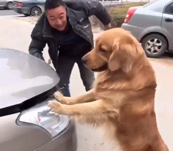 보닛 닫는 실수한 강아지