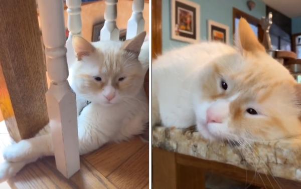 무쌍 고양이