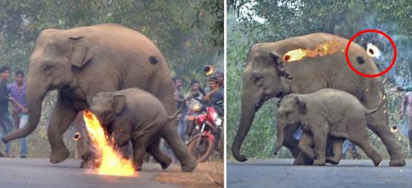 불덩어리 맞는 코끼리 모자