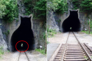 고양이터널