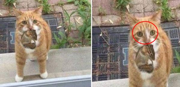 다람쥐 키우라는 고양이