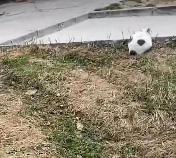 축구공 고양이