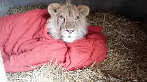 담요 사자