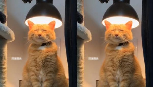 고양이 파마