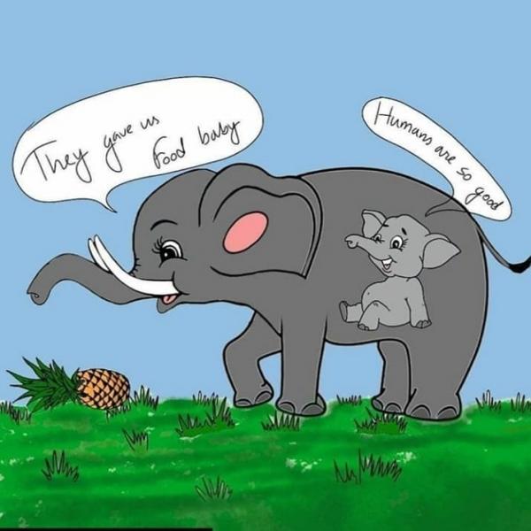 파인애플 폭탄 코끼리