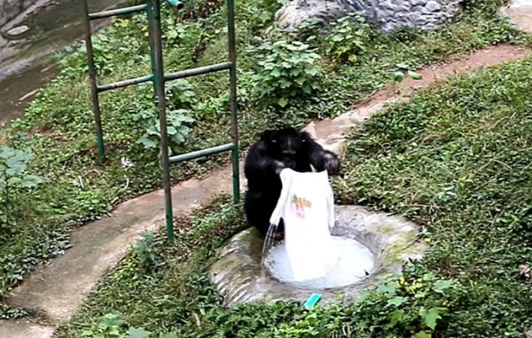 빨래하는 침팬지