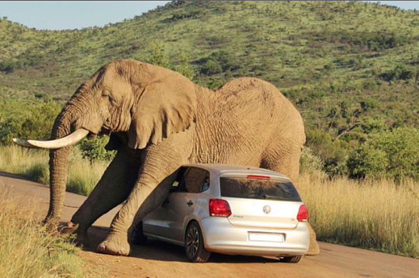 가려운 코끼리