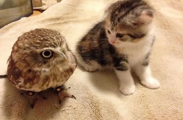 고양이와 올빼미