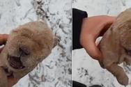 얼어죽은 강아지
