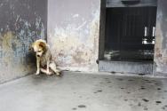 동물보호소에서 유난히 슬퍼보이는 강아지