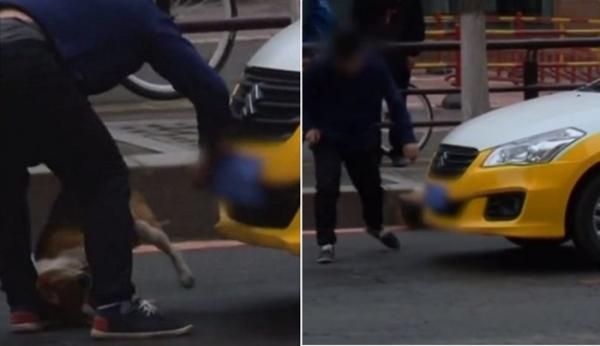 택시 유기견