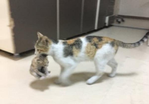 고양이병원