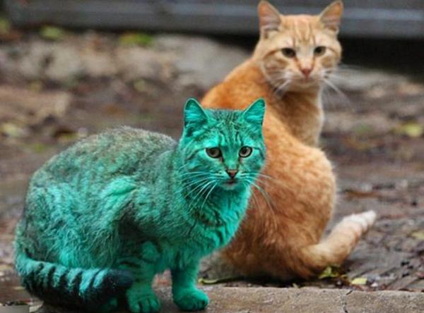 초록색 고양이