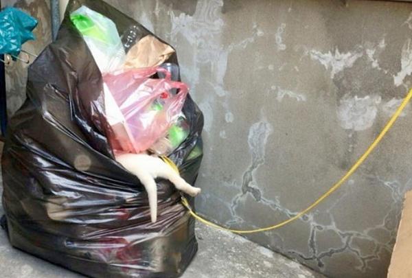 쓰레기봉투 강아지
