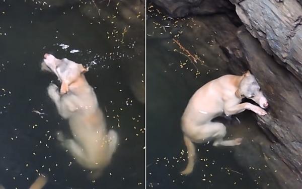 우물에 빠진 강아지