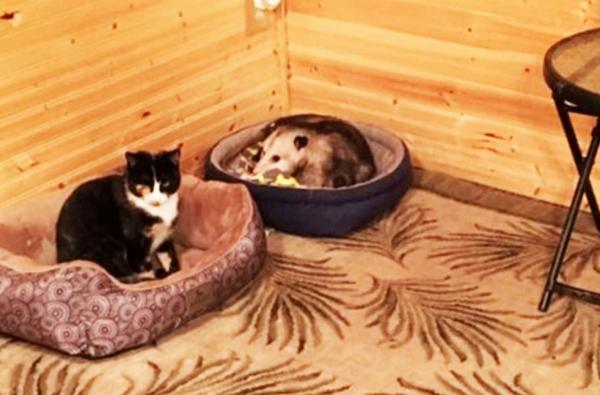 길고양이와 주머니쥐
