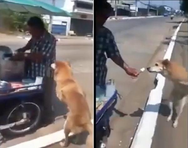 아이스크림 강아지1