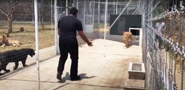 사자와 사육사의 만남