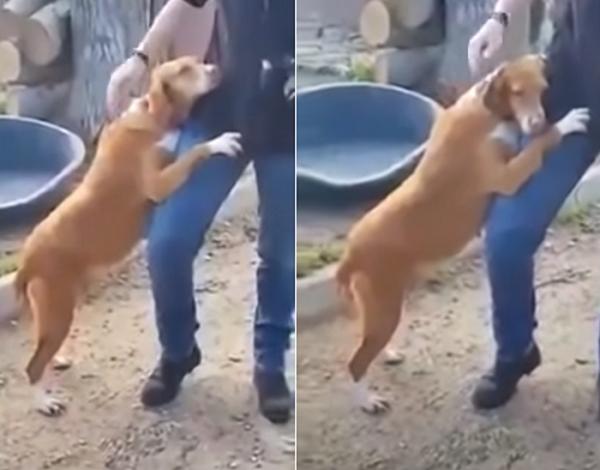 리포터 강아지2