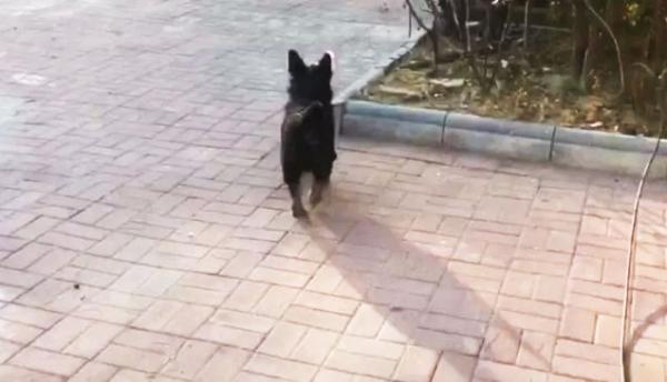 강아지를 따라가다