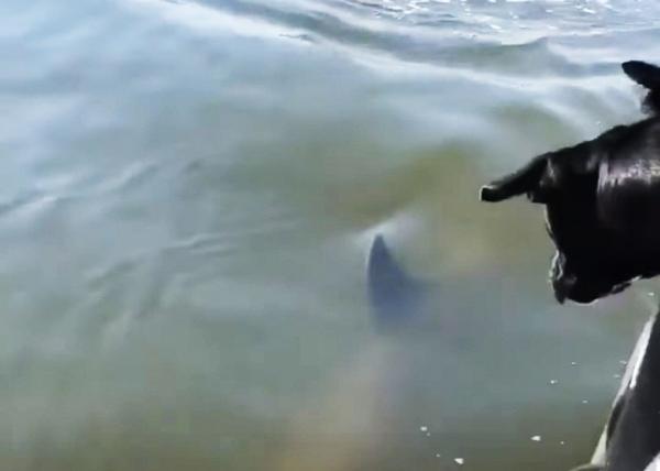 강아지에게 다가오는 바다 속 생물은?