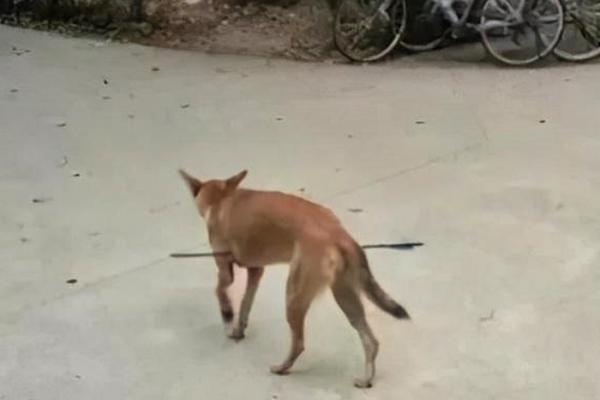 화살 강아지