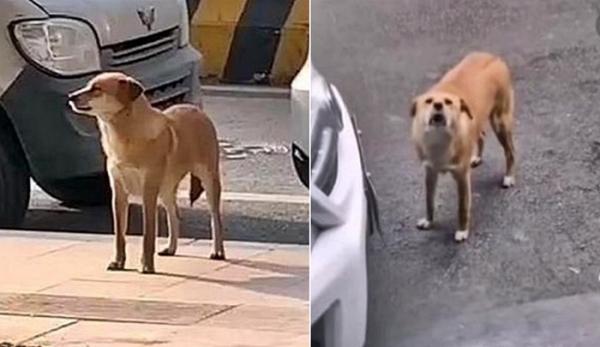 중성화 강아지1