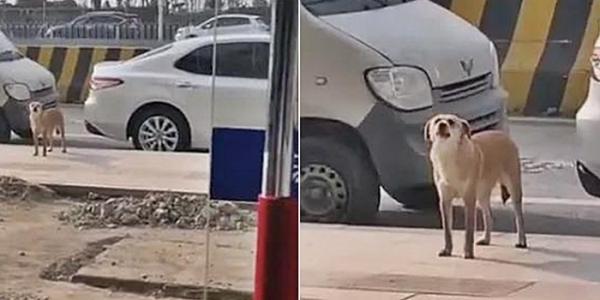 중성화 강아지2