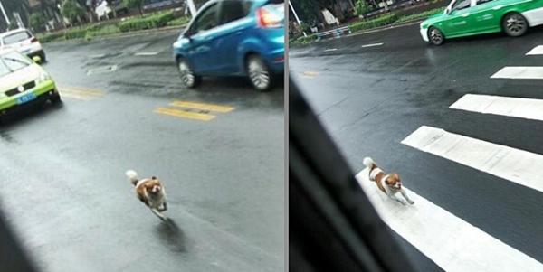버스 따라 달리는 강아지