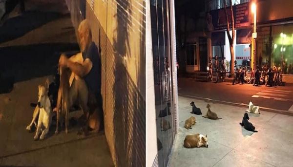 쓰러진 노숙자 아저씨를 기다리는 유기견들