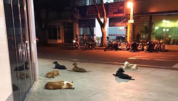 병원 앞에서 노숙자 아저씨를 기다리는 유기견들