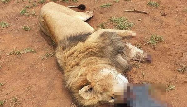 독살된 사자