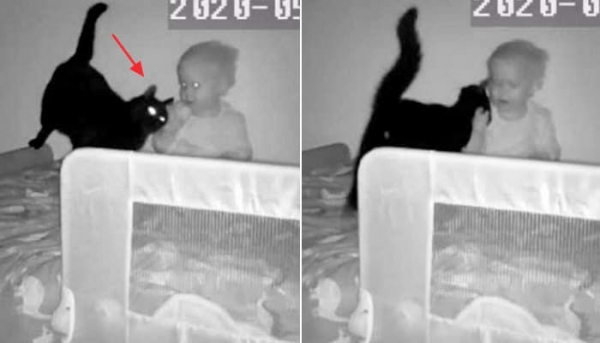 아기와 검은고양이