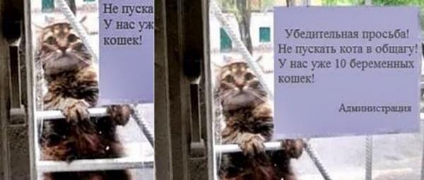 출입금지 고양이
