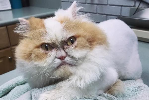 앵그리 고양이