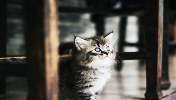 한 곳을 주시하는 고양이